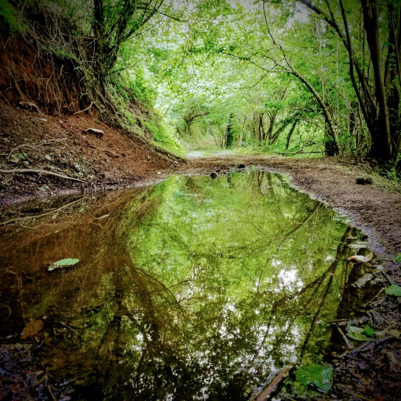 Foresta Regionale di Roccarainola