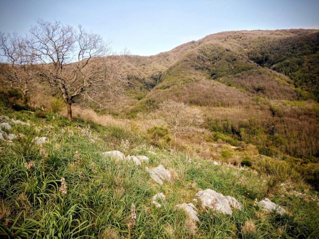 Foresta di Roccarainola